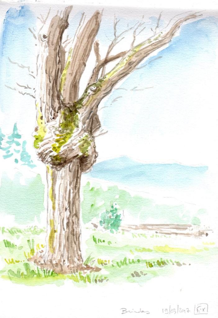 arbre au soleil