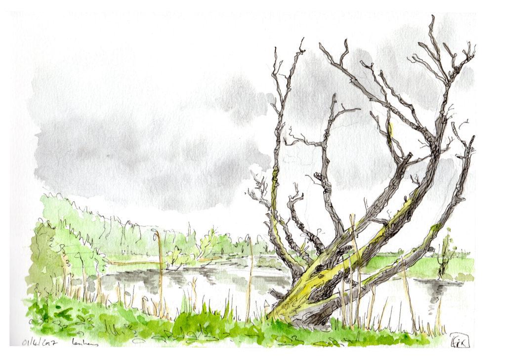 20170401 arbre et rivière RDCT