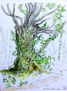 20180802 arbre reine-mère RDCT