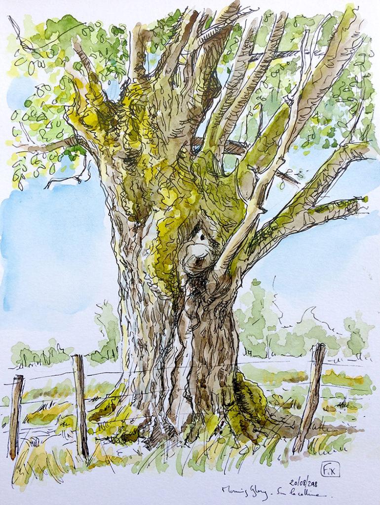20180820 arbre parcours du coeur RDCT
